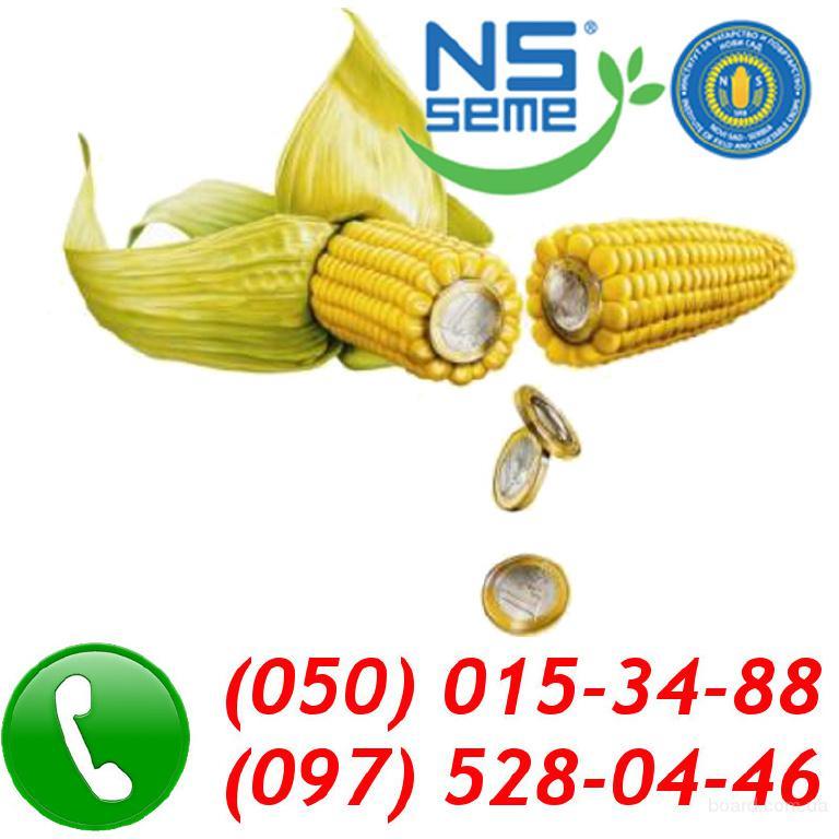 Продам семена кукурузы NS Seme (Сербия)