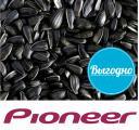 Семена подсолнуха Pioneer различных гибридов