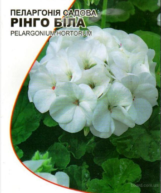 """Насіння пеларгонії садової білої """"Рінго"""""""