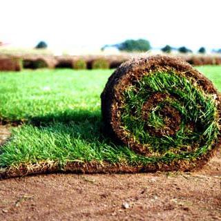Рулонный газон Киев и область.От 55 грн за метр