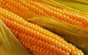 Купим кукурузу!!!