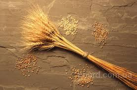 Купим пшеницу,сою,кукурузу.