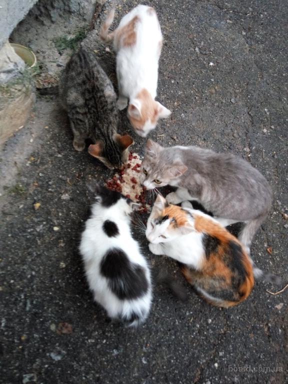 Раздам котят