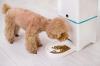 Автоматическая кормушка для животных + с камерой и приложением