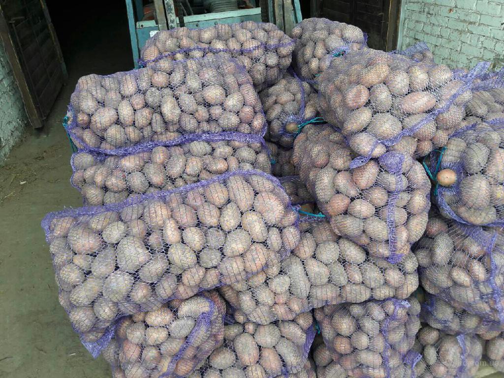 Картофель оптом 9 руб/кг