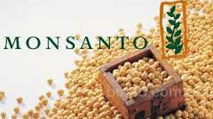 """Насіння сої """"Хардін"""", ГМО. Соя під Раундап"""