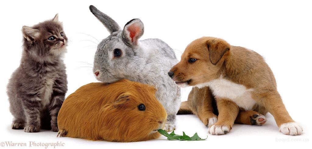 Зоомагазин -Зоо-Дом , ветеринарная аптека