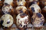 Перепелиные инкубационные яйца повышенной оплодотворенности Эко Ферма