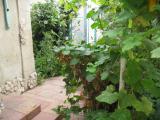 Сдам домик в Черноморке/проспект Свободы
