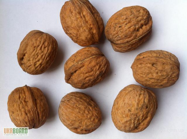 Закупаем грецкий орех в Славянске и регионе.