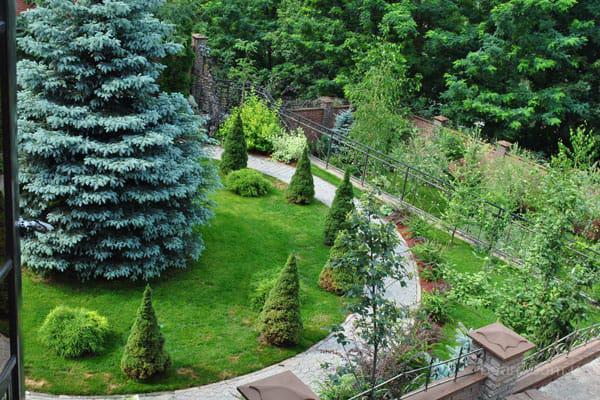 Широкий ассортимент декоративных растений из питомника для ландшафтного дизайна
