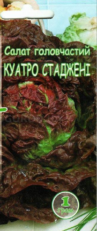 Насіння салату «Кватро Стаджені», ТМ «Агроном» - 1 грам