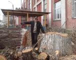 Спил деревьев Киев. Удаление деревьев Киев. Дробление веток.