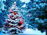 туры Закарпатье Новый год из Киева, автобусные туры Закарпатье Новый год, Карпаты из Киева Новый год