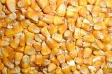Купуємо вологу кукурудзу