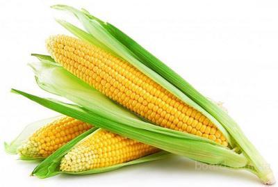Закупаю кукурузу с хозяйств и элеваторов Харьковской области.