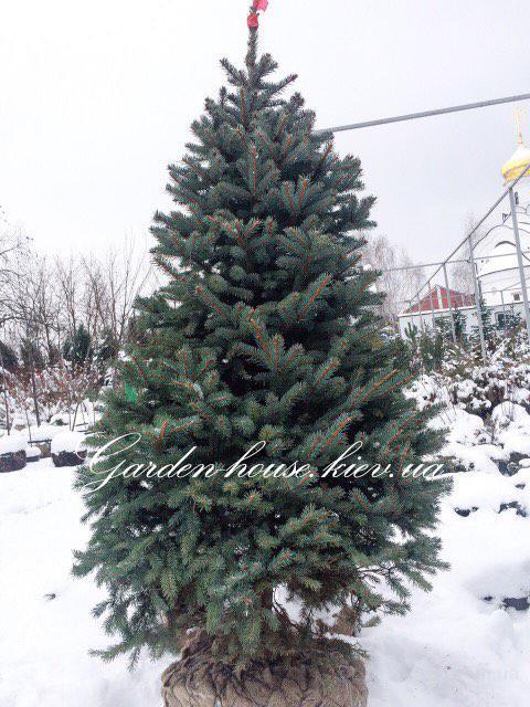 Елка на Новый Год! Купить Елку. Новогодние Елки Киев 180см +