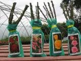 Фермерское хозяйство питомник в Польше предлагает плодовые деревья и кусты