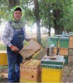 Продам пчелосемьи  (продам)