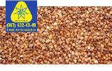 Продам семена гречихи, семена гречки