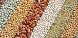 Продам семена, горох, соя, нут, просо, ячмень, кукуруза, подсолнечник, гречка
