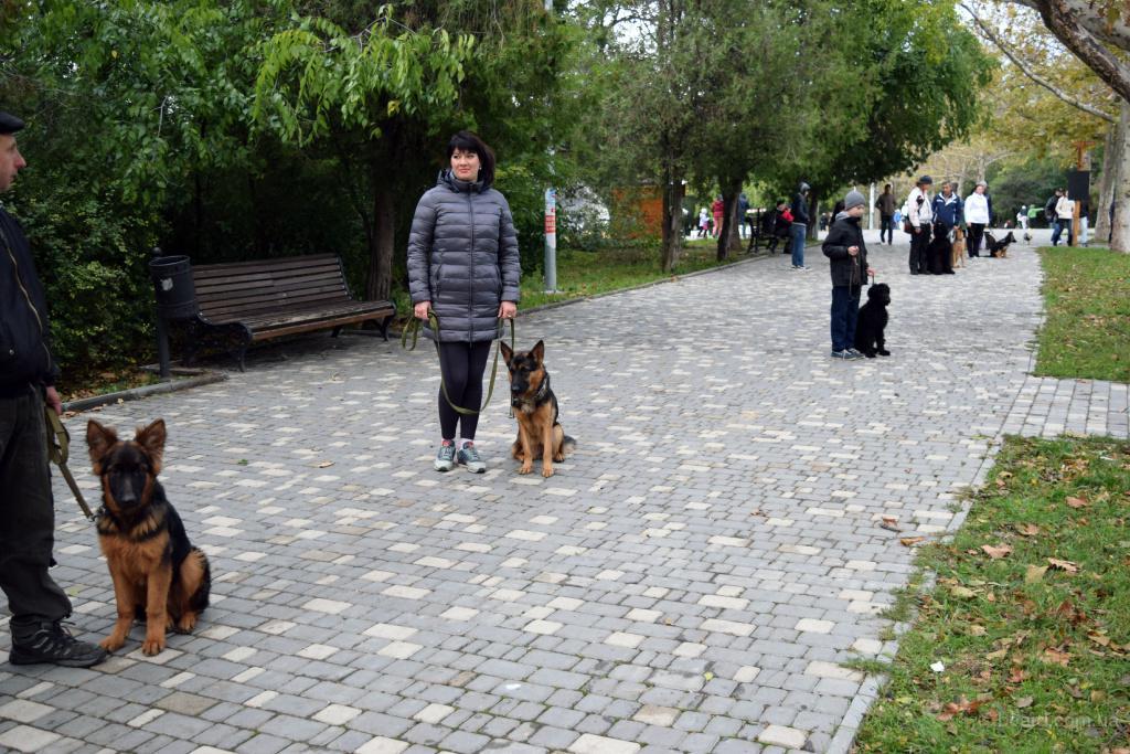 дрессировка собак индивидуальный подход
