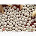 Продам посівний матеіал квасолі сахарка