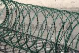 Егоза Казачка с полимерным покрытием зеленого цвета 450/3