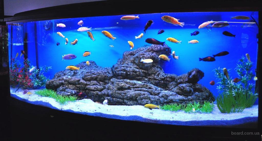 Аквариумы  Одесса. Установка аквариумов.  Чистка аквариумов.