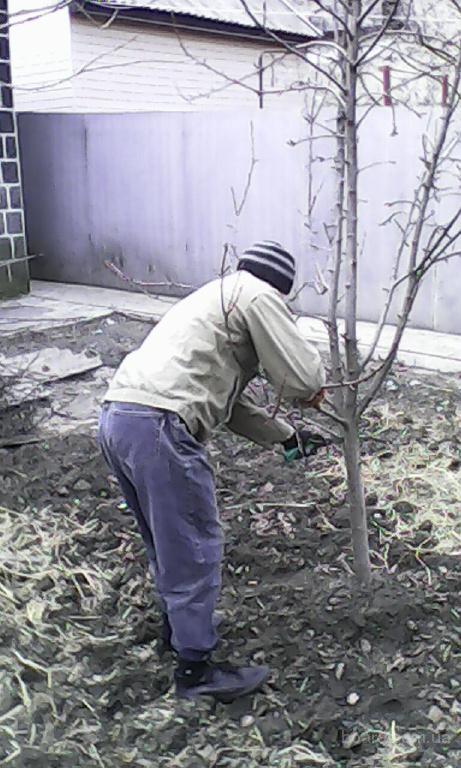 Подрезка фруктовых деревьев в Донецке