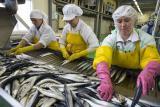 Работодатель предлагает работу на рыбном производстве. Требуются женщины, семейные пары.Работа в Польше.