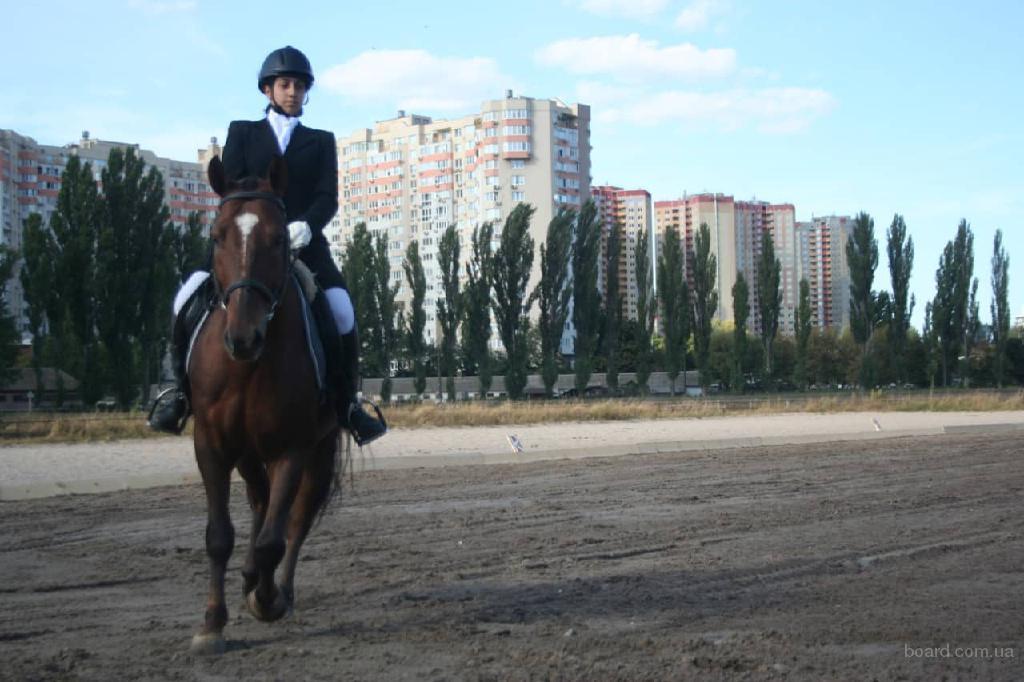 """Киев.Уроки верховой езды. Работа с лошадью с земли. Фан-клуб """"Водограй"""""""