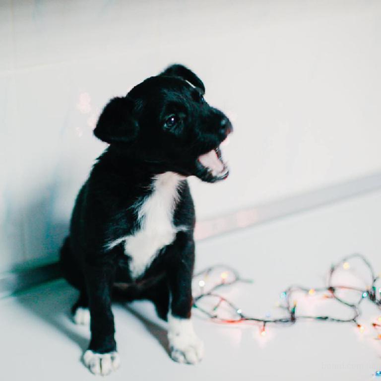 симпотичная собачка -девочка ищет семью