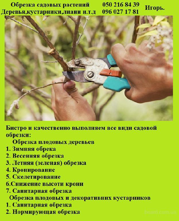 Обрезка плодових деревьев