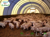 Подстилка для животных Биоферм
