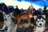 щенята Аляскинского Маламута