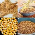 Дорого закупаем зерновые и масличные по Украине