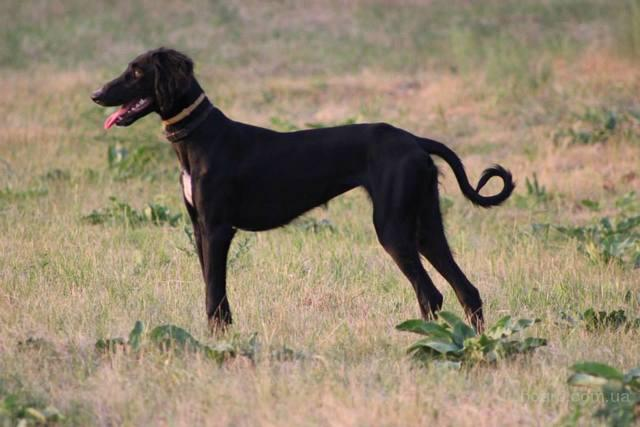 Алабай Среднеазиатская овчарка фото собаки цена