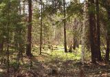 Срочно участо Киевское море, лес 12 соток, Ясногородка от хозяина