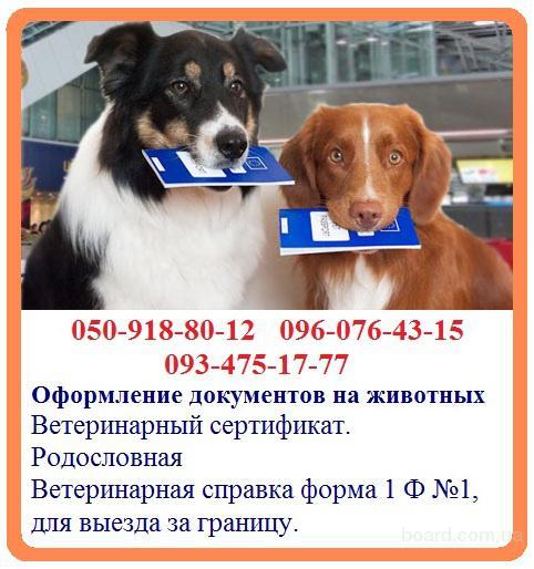 Оформление документов на животных - быстрое оформление. Ветеринарная справка форма 1 Ф №1, для выезда за границу. Ветеринарный сертификат