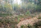 Продам участо Киевское море, лес 12 соток, от хозяина