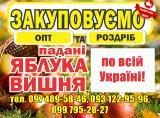 Закупаем яблоки-паданки, вишню оптом и в розницу
