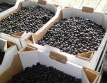 Продам ягоды чёрной смородини.
