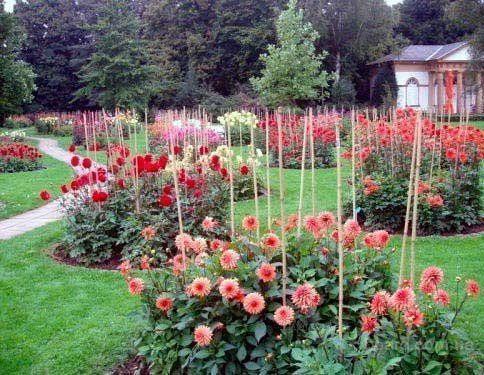 Подпорки и колышки для цветов, растений, винограда, кустов, кустарников, деревьев! С доставкой по всей Украине!