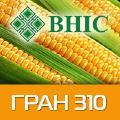 Продам гибрид кукурузи Гран 310 (ВНИС)