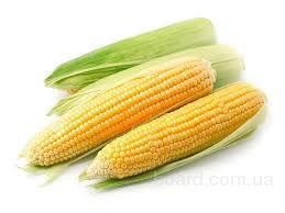 Внимание! Дорого закупаем кукурузу!