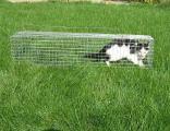 Живоловка для кота. Купить клетку- ловушку для кошек и котов. Надежно. Безопасный отлов