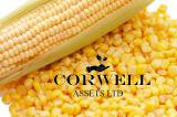 Куплю кукурузу, пшеницу, сою, горох, рапс и семечку