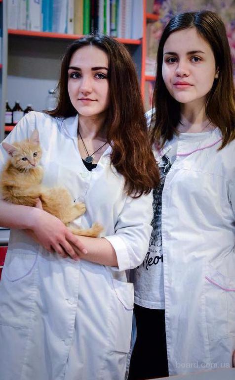 Круглосуточные услуги ветеринарной клиники в Йошкар-Оле