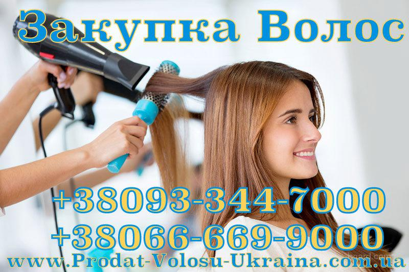 Продать Волосы Берестечко, скупка волос Берестечко, покупаем волосы Берестечко, Закупаем волосы Берестечко в Луцке